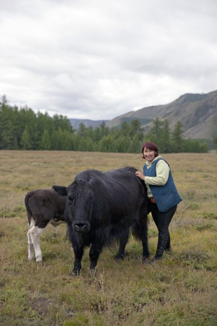 Bayir-Kys Banchyk with one of her yaks Masha. Mrs Banchyk, 40, a mother of three and native of this remote Kachyk area in southeastern Tuva bordering Mongolia, holds a well-paying government job of director of the village hall and has about 180 of own cows, several horses, and yaks. After the breakup of the Soviet Union citizens were allowed to raise stock of their own, and many Tuvans who had earlier been forced to abandon their thousand-year-old stock farming practices by the Soviet regime are gradually returning to the lifestyles of their stock farming ancestors.